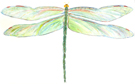 dragonfly_green