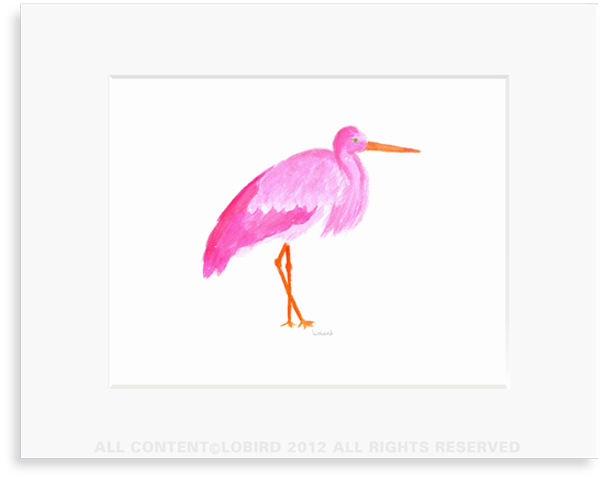 Pink Stork Standing